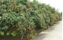 Thanh Hà đẩy mạnh phát triển nông nghiệp gắn với du lịch