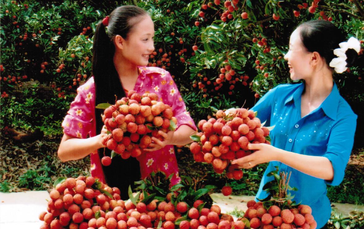 Vải và nhãn Việt Nam được Mỹ cho phép nhập khẩu